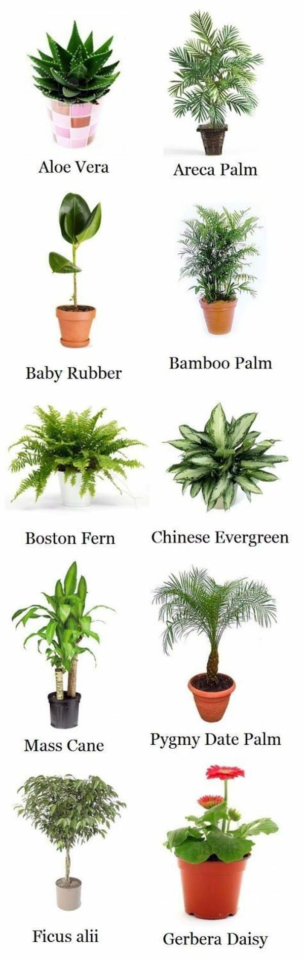Palm species houseplants rhapis excelsa is one of the most popular indoor palm trees - Most popular house plants ...