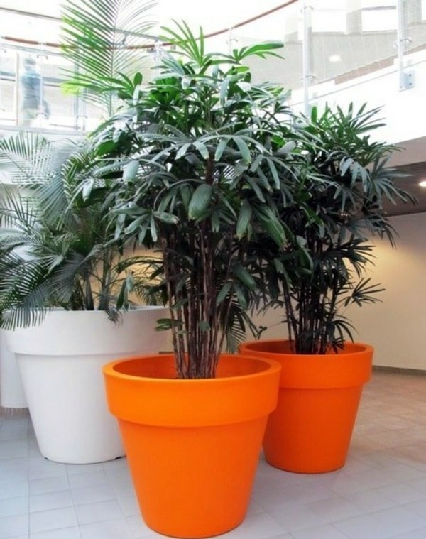 Palm Tree Types Of Houseplants on types of indoor palms, types of bamboo houseplants, common palm houseplants, types of trees in florida, types of lily houseplants,