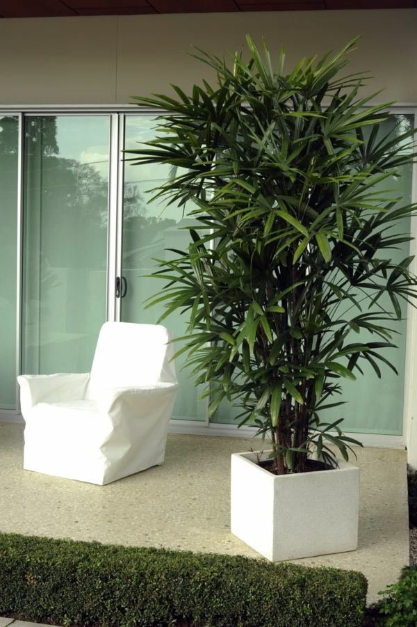 how to take care of indoor palm tree