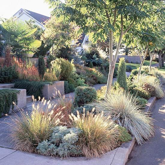 Drought Tolerant Front Yard: Compatible Drought Plants