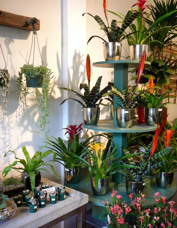 Exotic decoration with tropical plants how to care for - Decorate home with plants ...
