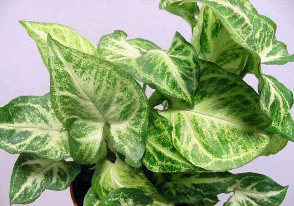 Indoor plants suitable for dark locations