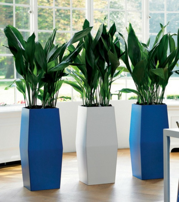 Indoor Plants Suitable For Dark Locations Interior Design Ideas Avso Org