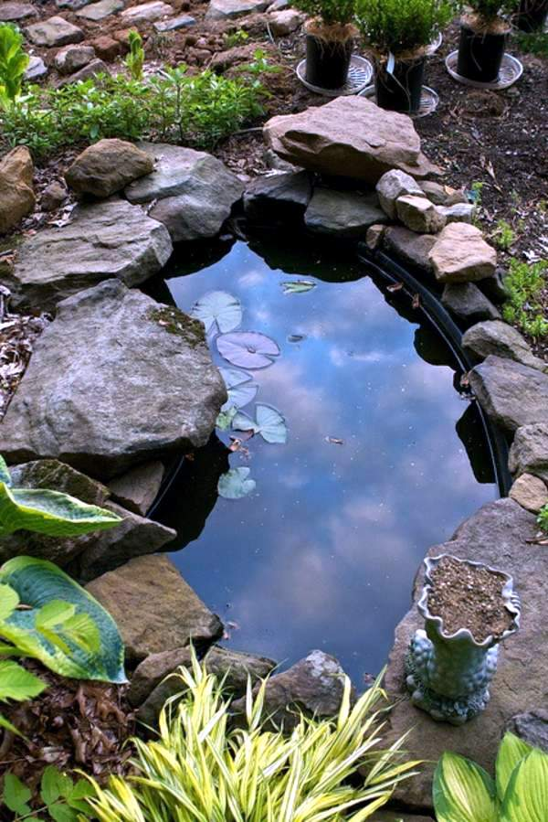Creating a garden pond and create a green oasis interior for Fish for small outdoor pond