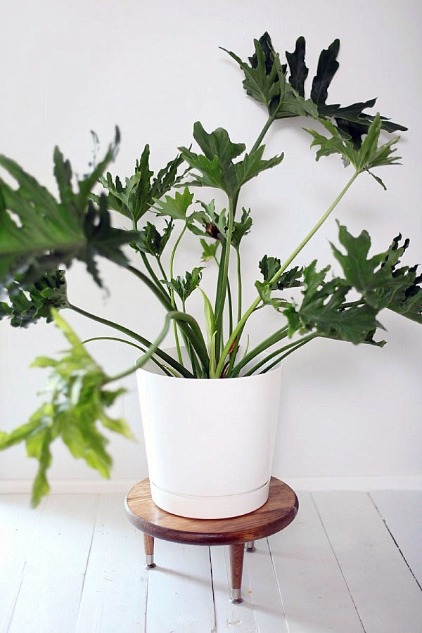 DIY - Do it yourself - DIY Projects - Homemade plant stand for your space