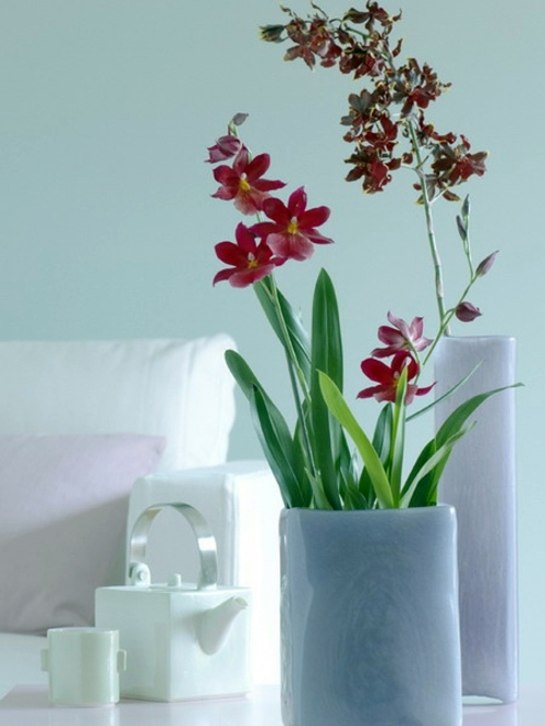 14 Luxury Ideas For Decorating With Orchids Interior