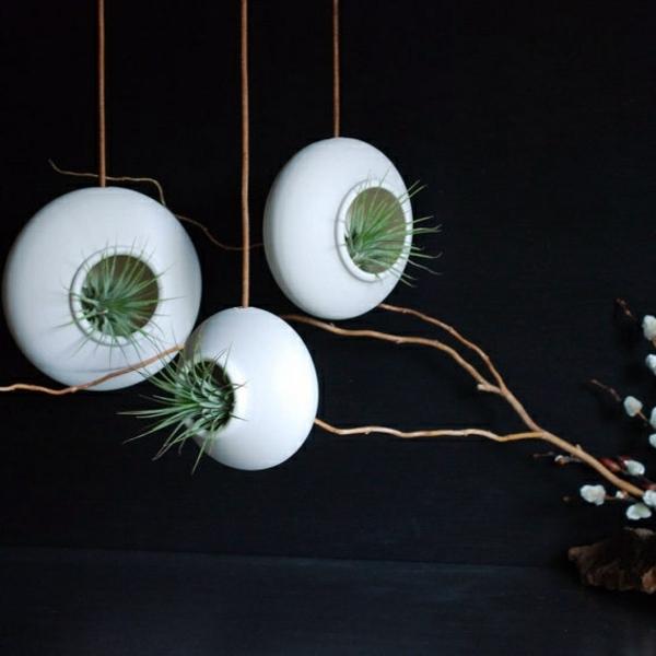 Hanging Indoor Plants And Patio Plants Hanging Plants