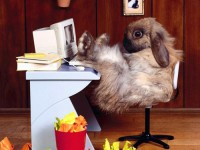 the-legend-of-the-easter-bunny-where-does-the-easter-bunny-1415026619.jpg