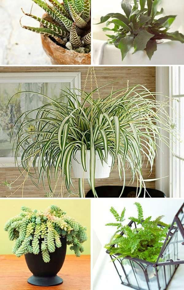 What Indoor Plants Need Little Light Interior Design