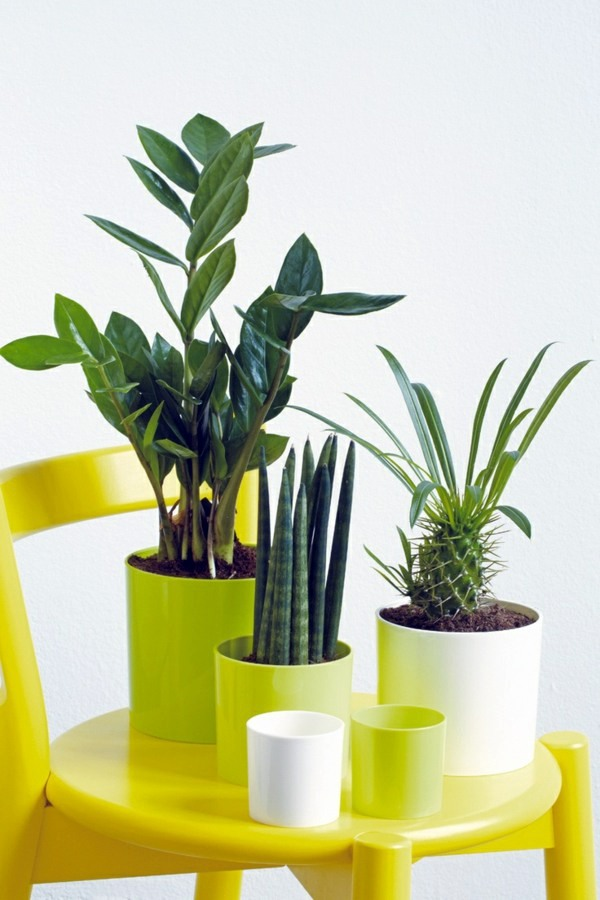 Garten & Pflanzen - Feng Shui plants for harmony and positive energy in the living room