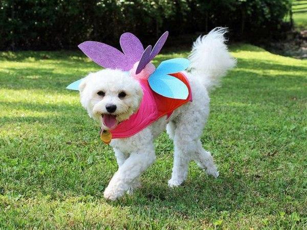 Halloween Deko - Cool Dog Clothing for Halloween