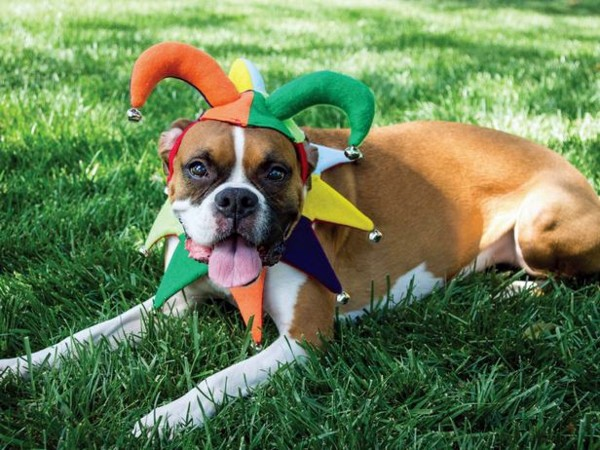 Haustiere - Cool Dog Clothing for Halloween