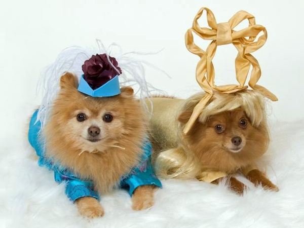 Cool Dog Clothing for Halloween