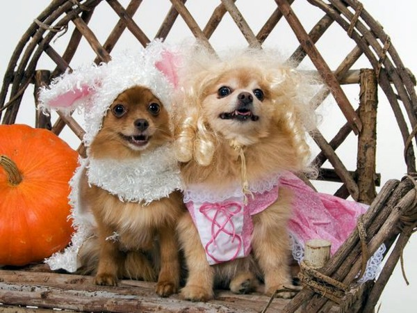 Tierwelt - Cool Dog Clothing for Halloween