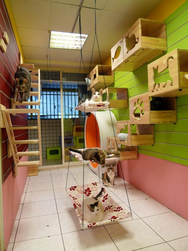 Modular Cat Climbing Wall Of Catswall Interior Design Ideas Avso Org