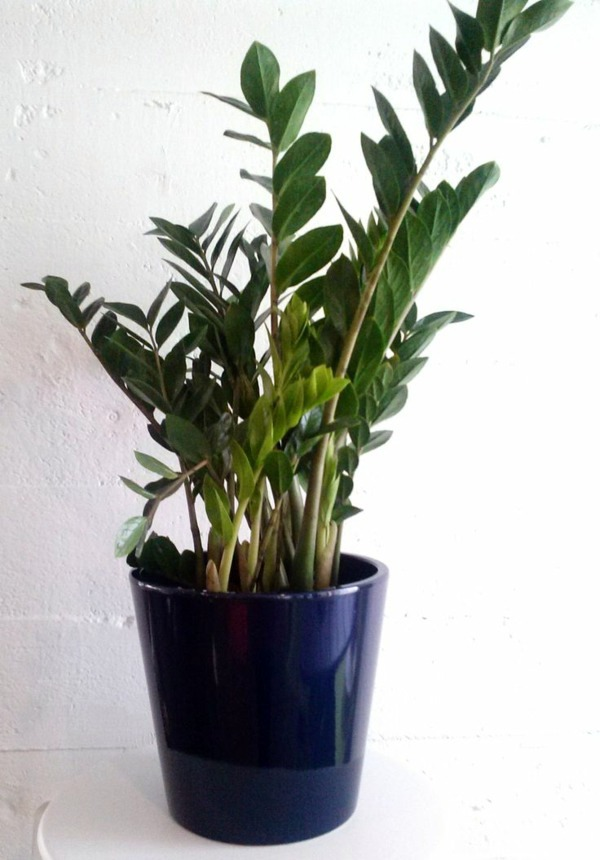 What Indoor Plants Need Little Light