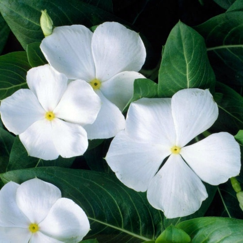 List Of Flower Names With Meanings And Pictures Buzzle