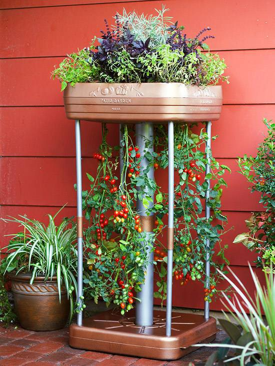 20 Interesting Fresh Ideas For Growing Vegetables In