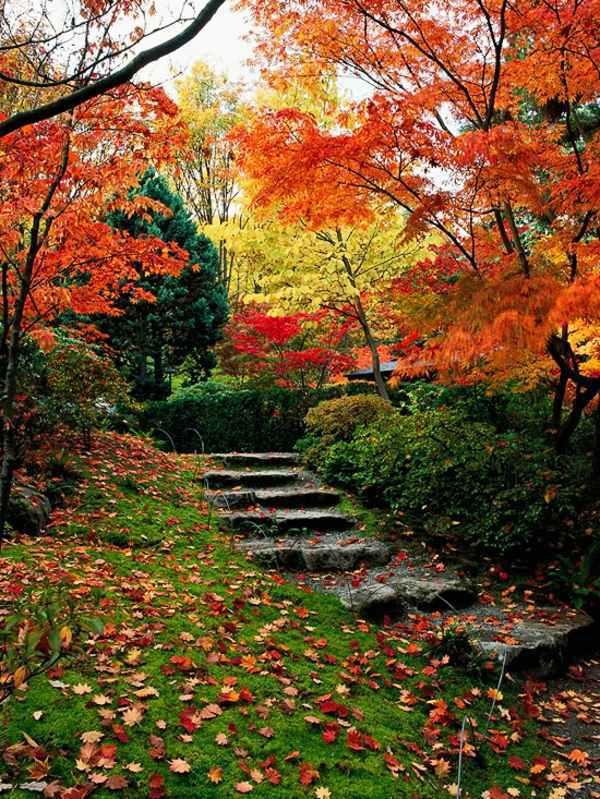 Japanese Garden Landscape Drawing
