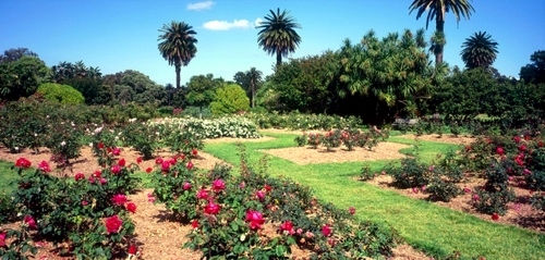 Enjoy the beautiful scenery on the State Garden Show in Australia