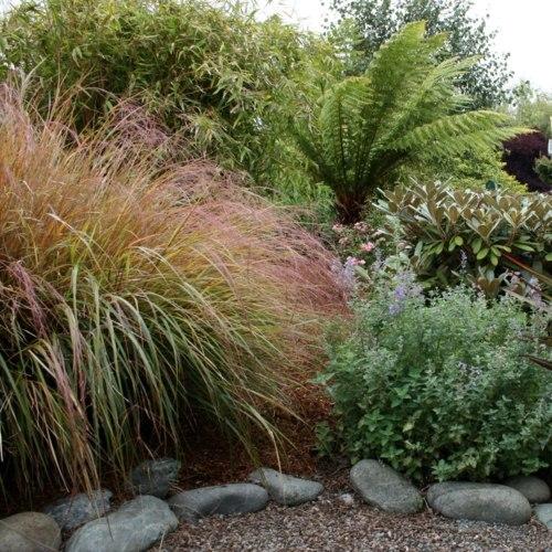 Make Shade Garden With Tropical Plants Interior Design Ideas
