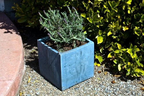 DIY flower pots made of concrete - 12 great projects for growers outside