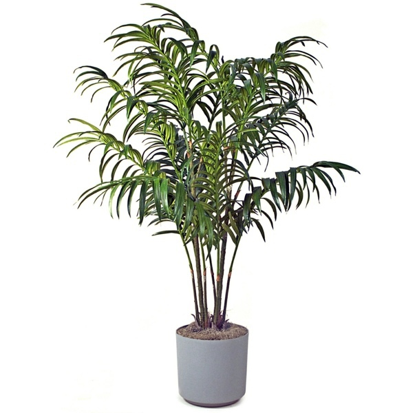 Garten & Pflanzen - Palm species as house plants - hardy, exotic solutions