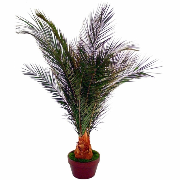 Gartengestaltung - Palm species as house plants - hardy, exotic solutions