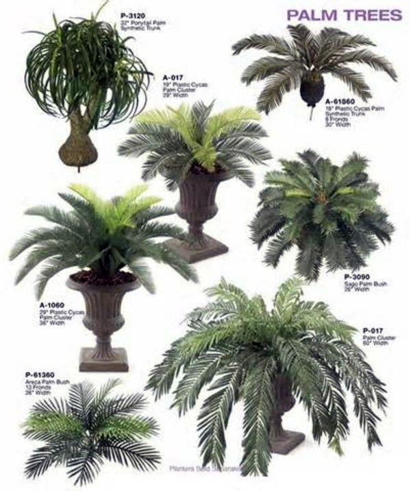 Palm species as house plants - hardy, exotic solutions