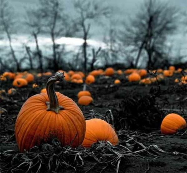 Halloween Schminken - Capture the perfect moment - Horror Halloween images