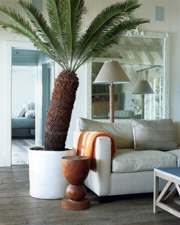 Indoor Palm Images Which Are The