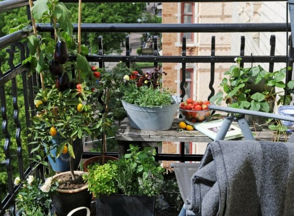 Cool ideas for balcony plants - Practical advice to make a garden on the balcony