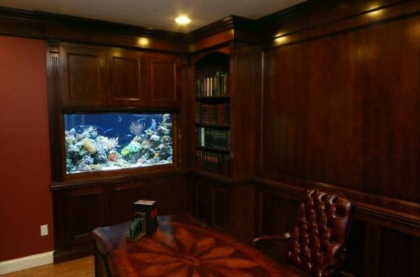 Aquarium at work - soothing and beautiful decoration ...