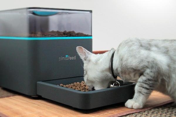 Feed the pet via smartphone
