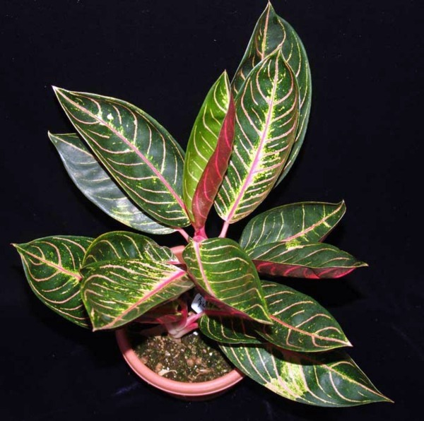 Indoor Plants Suitable For Dark Rooms Interior Design Ideas Avso Org