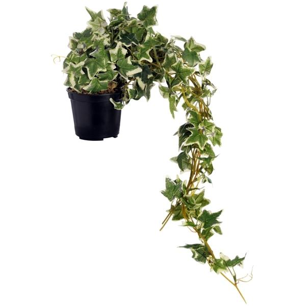 Indoor plants suitable for dark rooms