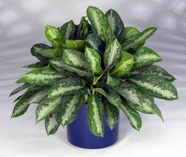 Innenarchitekt - Indoor plants suitable for dark rooms
