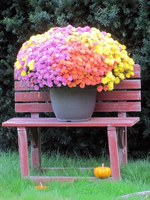 Dekoideen - 20 tips for garden accessories and garden decorations that will liven up your landscape