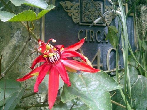 Garten und Landschaftsbau - Garden and Landscaping - 5 gorgeous flowers for warm climate