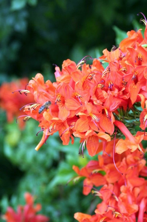 Gartengestaltung - Garden and Landscaping - 5 gorgeous flowers for warm climate
