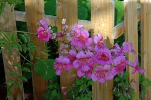 Garden and Landscaping - 5 gorgeous flowers for warm climate