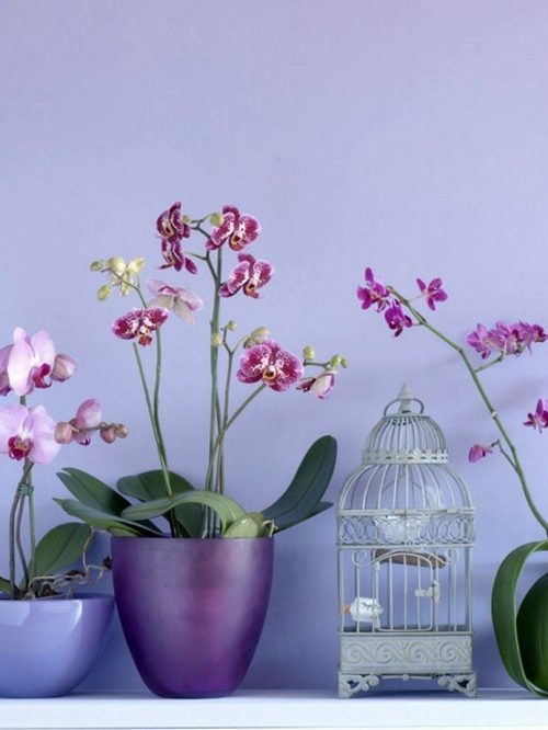 14 Luxury ideas for decorating with orchids