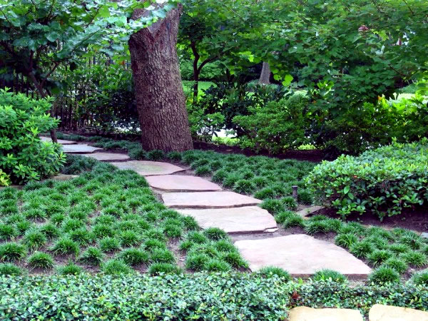 The Best Plants For Shaded Areas Interior Design Ideas Avso Org